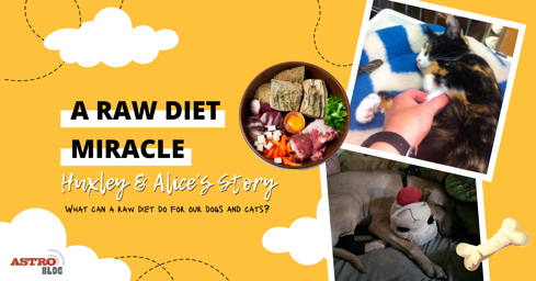 A Raw Diet Miracle
