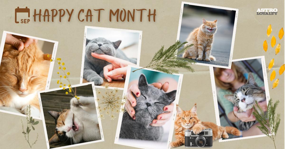 Happy Cat Month