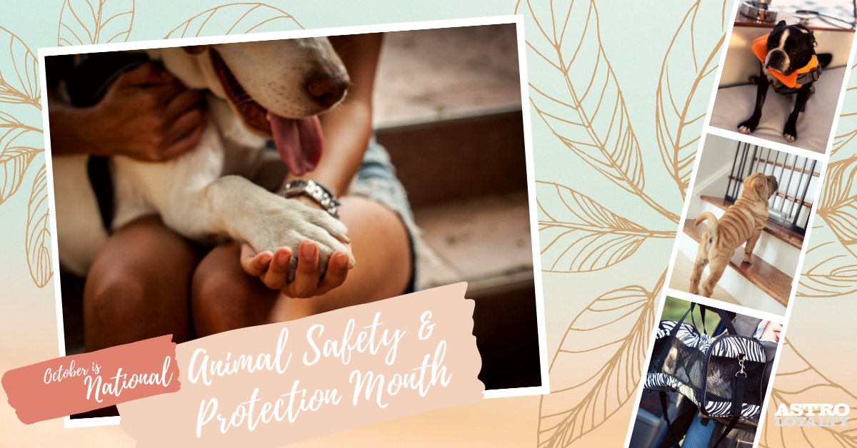National Animal Safety and Protection Month.