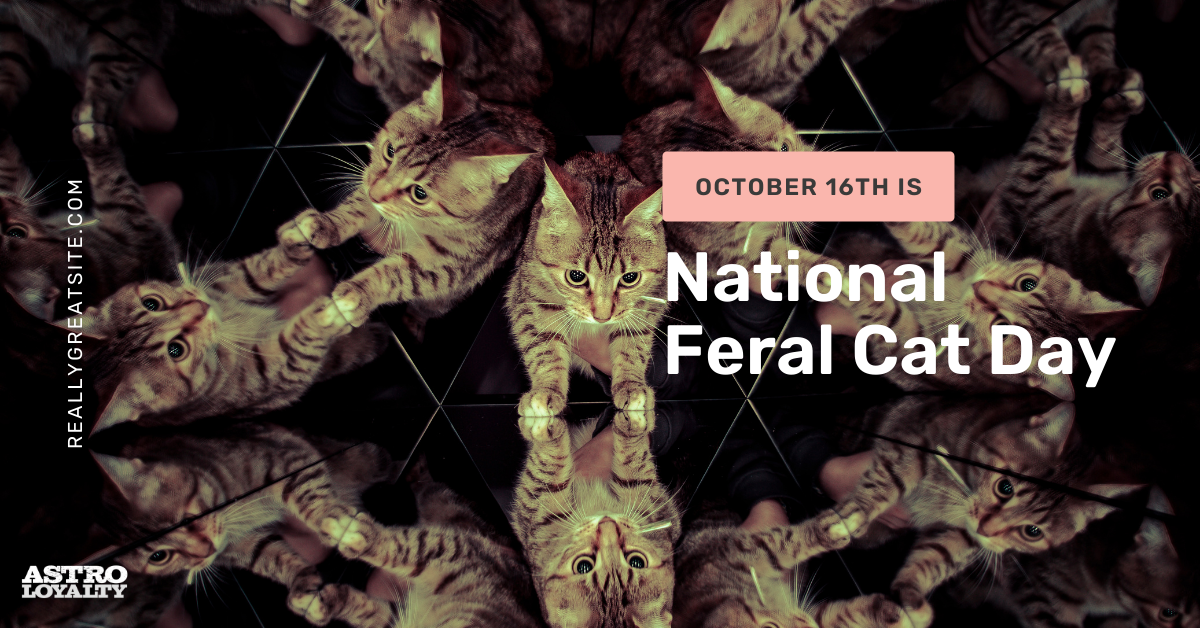 Oct. 16_National Feral Cat Day