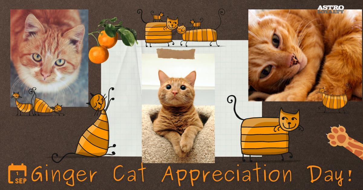 Sept. 1_Ginger Cat Appreciation Day