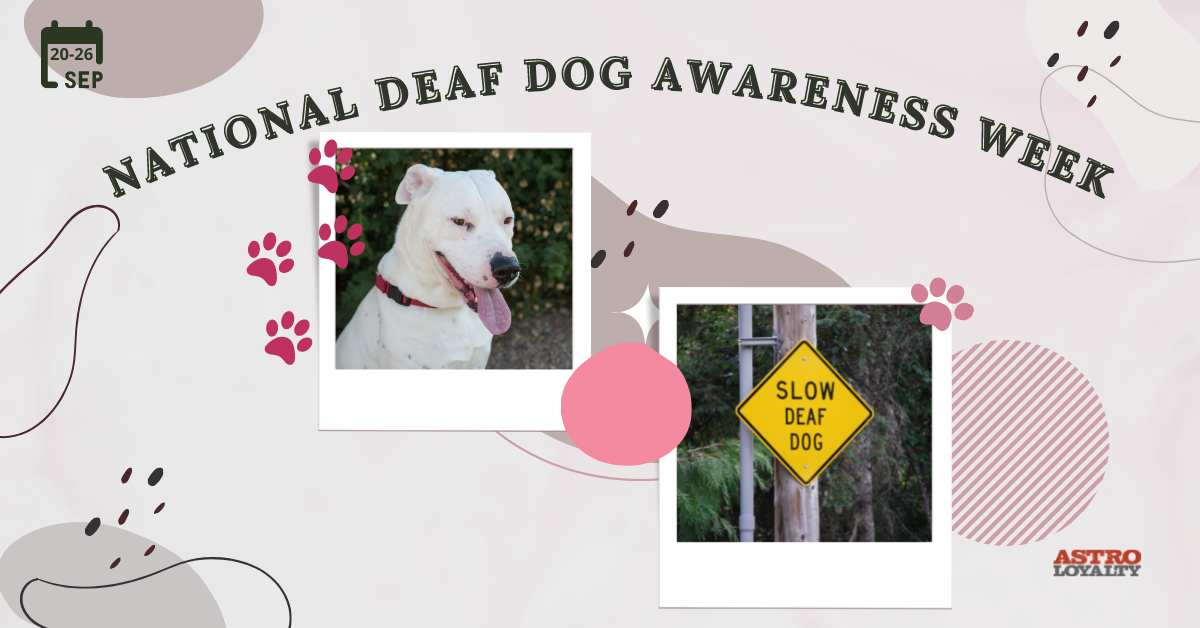 Sept. 20-26_National Deaf Dog Awareness Week